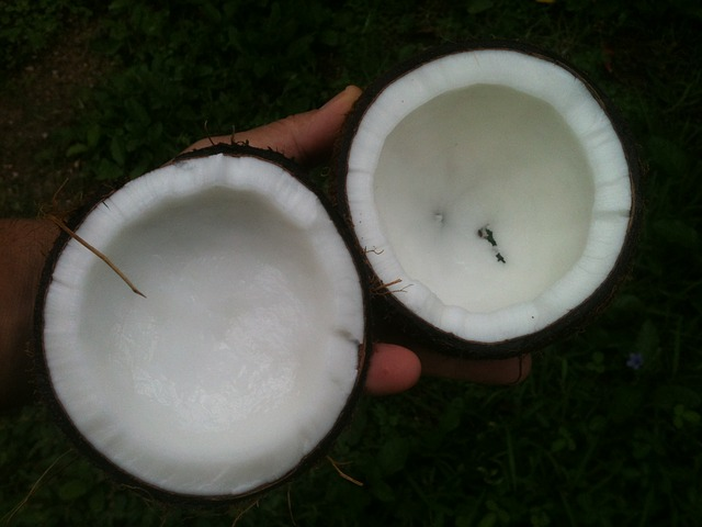 take coconut oil to lose weight